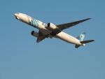 さゆりんごさんが、成田国際空港で撮影したエジプト航空 777-36N/ERの航空フォト(写真)
