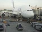 fortnumさんが、スワンナプーム国際空港で撮影したタイ国際航空 A380-841の航空フォト(写真)