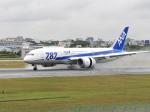 @たかひろさんが、伊丹空港で撮影した全日空 787-8 Dreamlinerの航空フォト(写真)