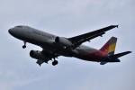こじゆきさんが、済州国際空港で撮影したアシアナ航空 A320-232の航空フォト(写真)