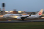 rokko2000さんが、伊丹空港で撮影した日本航空 737-846の航空フォト(写真)