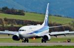 Dojalanaさんが、函館空港で撮影した全日空 737-881の航空フォト(写真)