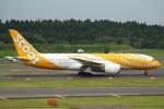 セブンさんが、成田国際空港で撮影したスクート 787-8 Dreamlinerの航空フォト(飛行機 写真・画像)