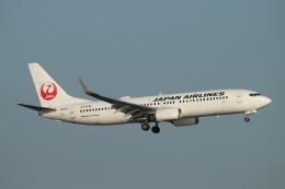 ceskykrumlovさんが、羽田空港で撮影した日本航空 737-846の航空フォト(写真)