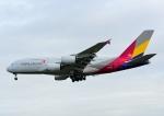 じーく。さんが、成田国際空港で撮影したアシアナ航空 A380-841の航空フォト(飛行機 写真・画像)