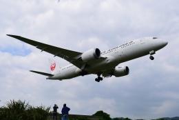 matatabiさんが、台北松山空港で撮影した日本航空 787-8 Dreamlinerの航空フォト(飛行機 写真・画像)