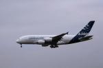 kumagorouさんが、成田国際空港で撮影したエアバス A380-841の航空フォト(飛行機 写真・画像)