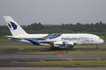セブンさんが、成田国際空港で撮影したマレーシア航空 A380-841の航空フォト(飛行機 写真・画像)