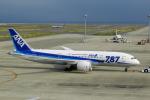 せせらぎさんが、中部国際空港で撮影した全日空 787-8 Dreamlinerの航空フォト(写真)