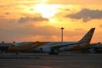 関西国際空港 - Kansai International Airport [KIX/RJBB]で撮影されたスクート・タイガーエア - Scoot Tigerair [TR/TGW]の航空機写真