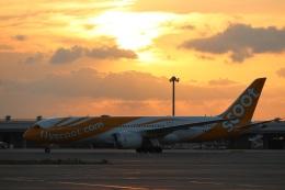 つっさんさんが、関西国際空港で撮影したスクート・タイガーエア 787-8 Dreamlinerの航空フォト(写真)