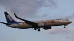 redbull_23さんが、成田国際空港で撮影した全日空 737-881の航空フォト(写真)