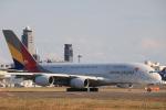 msrwさんが、成田国際空港で撮影したアシアナ航空 A380-841の航空フォト(写真)