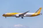 Y-Kenzoさんが、成田国際空港で撮影したスクート・タイガーエア 787-9の航空フォト(写真)