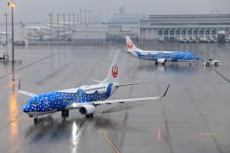 いっくんさんが、中部国際空港で撮影した日本トランスオーシャン航空 737-8Q3の航空フォト(飛行機 写真・画像)