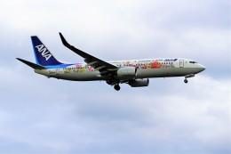 yoshibouさんが、成田国際空港で撮影した全日空 737-881の航空フォト(写真)