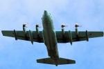 Wasawasa-isaoさんが、岐阜基地で撮影した航空自衛隊 C-130H Herculesの航空フォト(写真)
