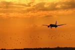 安芸あすかさんが、パリ オルリー空港で撮影したエールフランス航空 777-228/ERの航空フォト(写真)