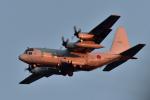 NFファンさんが、厚木飛行場で撮影した海上自衛隊 C-130Rの航空フォト(写真)