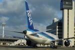 nontan8さんが、伊丹空港で撮影した全日空 787-8 Dreamlinerの航空フォト(写真)