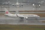 krozさんが、羽田空港で撮影した日本航空 737-846の航空フォト(写真)
