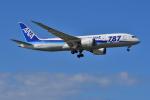 はるかのパパさんが、那覇空港で撮影した全日空 787-8 Dreamlinerの航空フォト(写真)