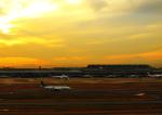 タミーさんが、羽田空港で撮影した全日空 737-881の航空フォト(写真)