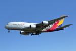 VEZEL 1500Xさんが、成田国際空港で撮影したアシアナ航空 A380-841の航空フォト(写真)