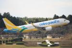 キイロイトリ1005fさんが、成田国際空港で撮影したセブパシフィック航空 A320-214の航空フォト(写真)