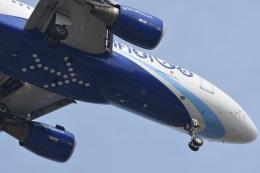 Kilo Indiaさんが、チャトラパティー・シヴァージー国際空港で撮影したインディゴ A320-214の航空フォト(飛行機 写真・画像)
