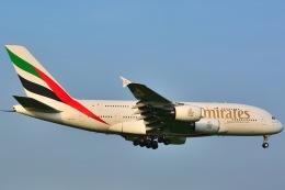 shining star ✈さんが、成田国際空港で撮影したエミレーツ航空 A380-861の航空フォト(写真)