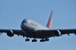 Dutchsamuさんが、成田国際空港で撮影したアシアナ航空 A380-841の航空フォト(写真)