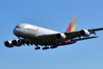 saoya_saodakeさんが、成田国際空港で撮影したアシアナ航空 A380-841の航空フォト(写真)