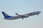 cassiopeiaさんが、成田国際空港で撮影した全日空 737-881の航空フォト(写真)