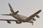 camelliaさんが、ドバイ国際空港で撮影したエミレーツ航空 A380-861の航空フォト(写真)