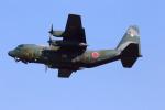 とらまるさんが、名古屋飛行場で撮影した航空自衛隊 C-130H Herculesの航空フォト(写真)