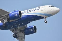 Kilo Indiaさんが、チャトラパティー・シヴァージー国際空港で撮影したインディゴ A320-271Nの航空フォト(飛行機 写真・画像)