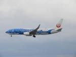 おっつんさんが、那覇空港で撮影した日本トランスオーシャン航空 737-8Q3の航空フォト(飛行機 写真・画像)
