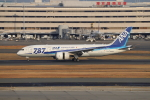 sumihan_2010さんが、羽田空港で撮影した全日空 787-8 Dreamlinerの航空フォト(写真)