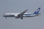 しゃこ隊さんが、上海虹橋国際空港で撮影した全日空 787-8 Dreamlinerの航空フォト(写真)