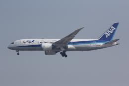 しゃこ隊さんが、上海虹橋国際空港で撮影した全日空 787-8 Dreamlinerの航空フォト(飛行機 写真・画像)