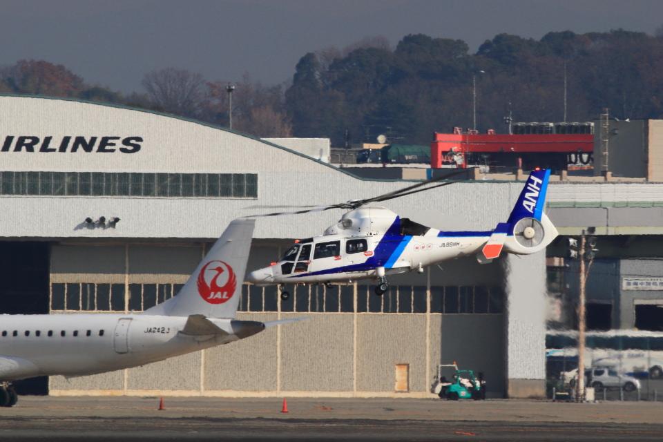 T.Sazenさんのオールニッポンヘリコプター Airbus Helicopters AS365/565 (JA66NH) 航空フォト