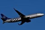 harahara555さんが、成田国際空港で撮影した厦門航空 737-85Cの航空フォト(写真)