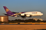 harahara555さんが、成田国際空港で撮影したタイ国際航空 A380-841の航空フォト(写真)
