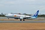 kix大好きカズチャマンさんが、伊丹空港で撮影した全日空 737-881の航空フォト(写真)