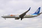 水月さんが、伊丹空港で撮影した全日空 737-881の航空フォト(写真)