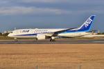 md11jbirdさんが、伊丹空港で撮影した全日空 787-8 Dreamlinerの航空フォト(写真)