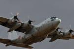 パラノイアさんが、厚木飛行場で撮影した海上自衛隊 C-130Rの航空フォト(写真)