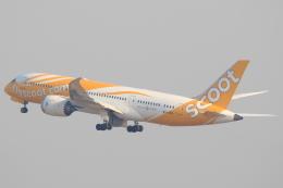 航空フォト:9V-OFH スクート (〜2017) 787-8 Dreamliner