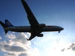 Squallさんが、伊丹空港で撮影した全日空 737-881の航空フォト(写真)